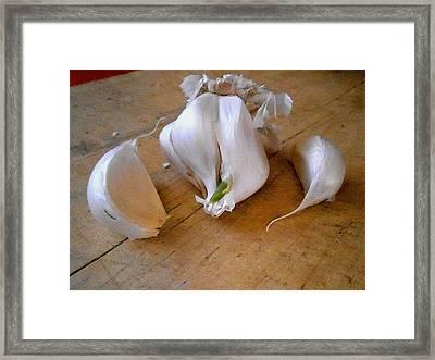 Garlic Green Framed Print by Aliceann Carlton
