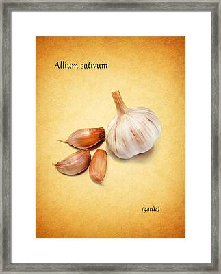 Garlic Framed Print by Mark Rogan