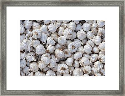 Garlic Framed Print by Tim Gainey