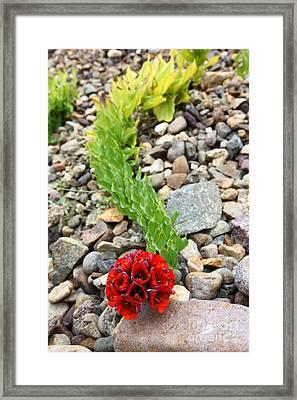 Garra De Leon Flower Framed Print