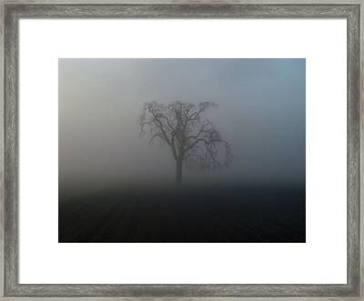 Garry Oak In Fog Framed Print by Cheryl Hoyle