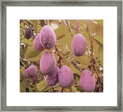 Gartenkunst Framed Print