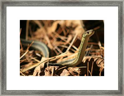 Garter View Framed Print by Neal Eslinger