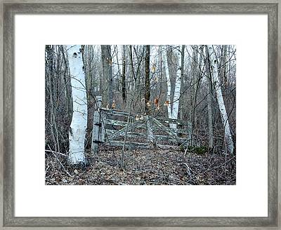 Gate And Birches Framed Print by Randi Shenkman