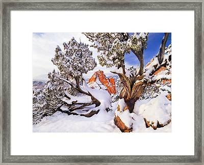 Haunting Beauty  Framed Print