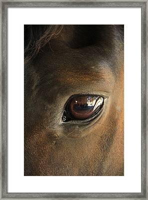 Gateway To A Horses Soul Framed Print by Shoal Hollingsworth