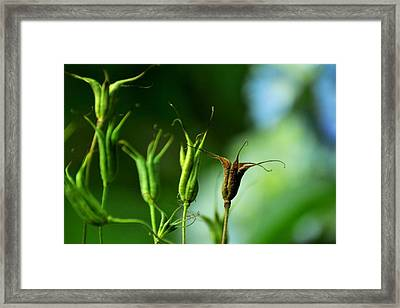 Framed Print featuring the photograph Gather If You Wish. Then Let Them Go. by Rebecca Sherman