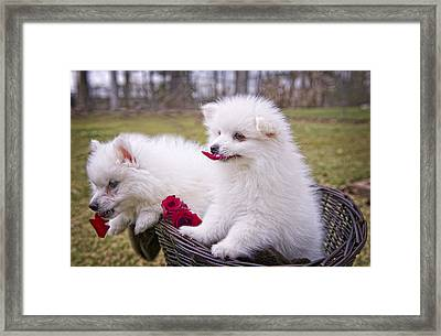 Gather Ye Rosebuds While Ye May . . . Framed Print by Bonnie Barry