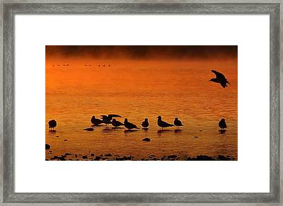 Gathering At Sunrise Framed Print by Nick Kloepping