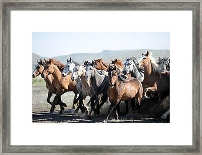 Gathering Horses Framed Print by Lee Raine