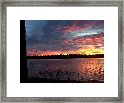 Framed Print featuring the photograph Gathering by Michele Kaiser