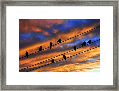 Framed Print featuring the photograph Gathering by Mike Flynn