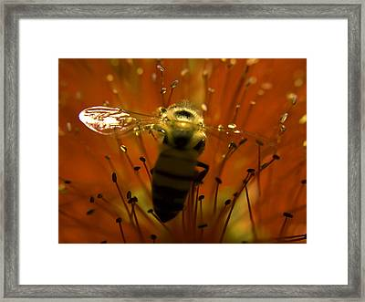 Gathering Nectar Framed Print by Camille Lopez