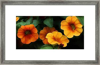 Gathering Of Petunias Framed Print by Bruce Bley