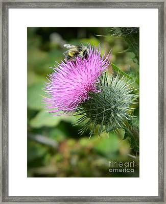Gathering Pollen Framed Print by Chalet Roome-Rigdon