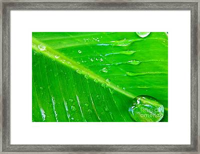 Gathering Rain Framed Print by Joy Hardee