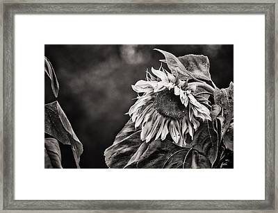 Gathering Sun Framed Print