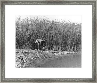 Gathering Tule Bulrushes Framed Print by Underwood Archives Onia