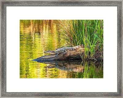 Gator 3 - Paint Framed Print by Steve Harrington