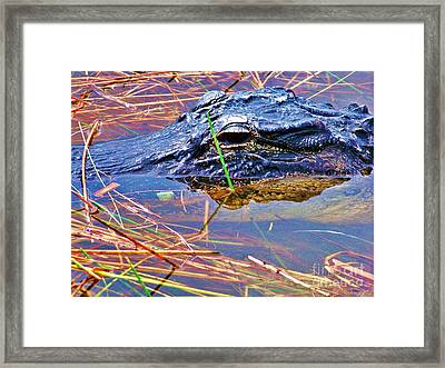 Gator Eye Framed Print