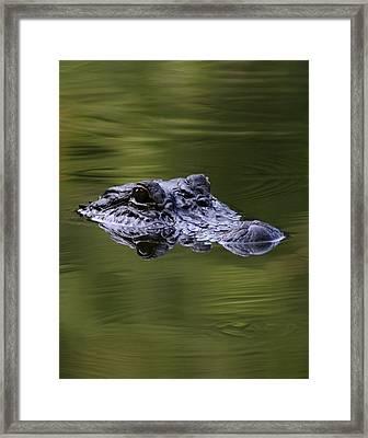 Gator Eyes 11x14 Framed Print by David Lynch
