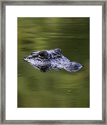 Gator Eyes 8x10 Framed Print by David Lynch