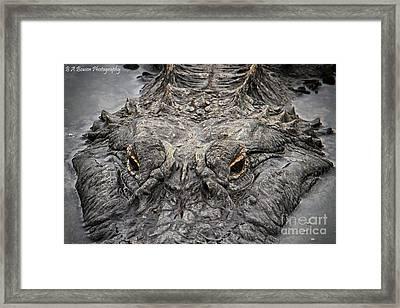 Gator Eyes Framed Print by Barbara Bowen