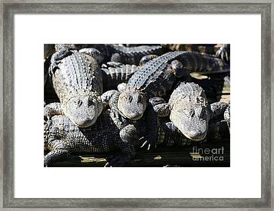 Gator Friends Framed Print