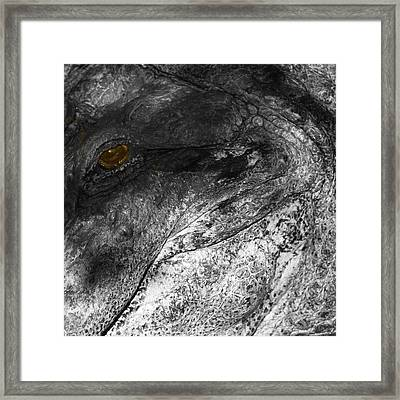 Gator Jaw Framed Print