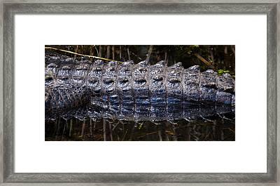 Gator Reflection Framed Print by Adam Pender