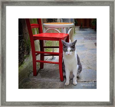 Gatto Italiano Framed Print
