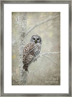 Guardian Of The Woods Framed Print by Beve Brown-Clark Photography