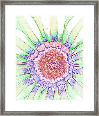 Gazania No.1 Framed Print