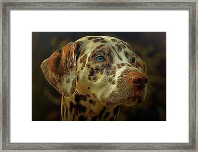 Gazing Into The Sunset Framed Print