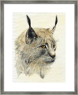 Gazing Lynx Framed Print by Phyllis Howard