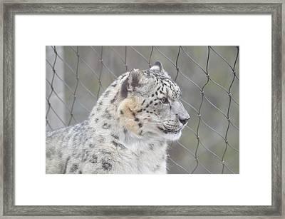 Gazing Framed Print
