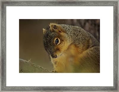 Gazing Squirrel Framed Print