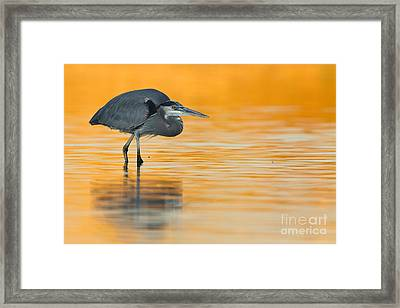 Framed Print featuring the photograph Gbh In Orange Water by Bryan Keil
