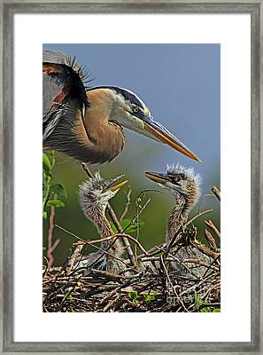 Great Blue Heron Twins Framed Print