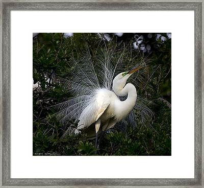 Framed Print featuring the photograph Geat Egret Mating Dance I by Kathy Ponce