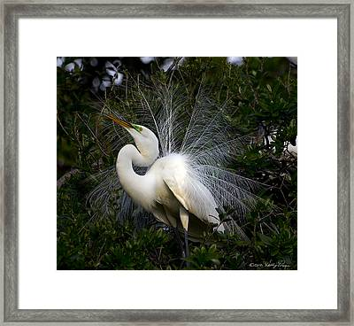 Geat Egret Mating Dance II Framed Print by Kathy Ponce