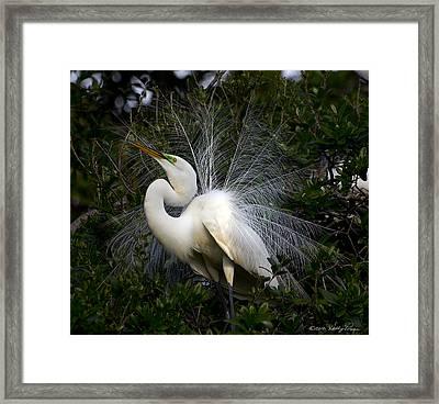 Geat Egret Mating Dance II Framed Print
