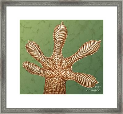 Gecko Foot Framed Print by Laurie OKeefe