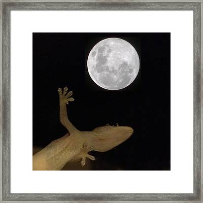 Gecko Moon Framed Print by Cameron Bentley