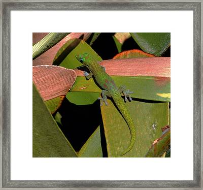 Gecko Framed Print by Pamela Walton