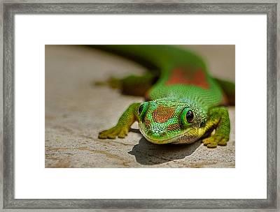 Gecko Portrait Framed Print by Linda Villers