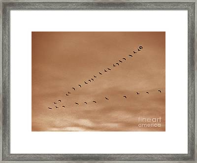 Geese 2 Framed Print by Judy Via-Wolff