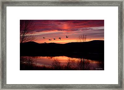 Geese After Sunset Framed Print