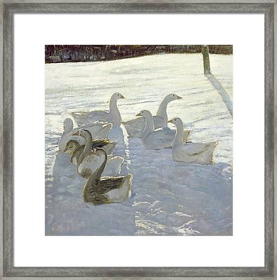 Geese Against The Light  Framed Print by Timothy Easton