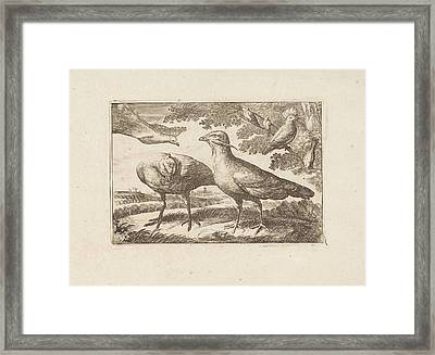 Geese And A Cockatoo, Francis Barlow, Pieter Schenk Framed Print by Francis Barlow And Pieter Schenk (i)